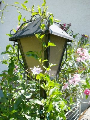 Strom im eigenen Garten