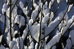 jeden hibiskus sicher durch den winter bringen gartentipps. Black Bedroom Furniture Sets. Home Design Ideas