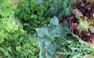 Ein Kräutergarten kann auch in der Küche Wunder wirken