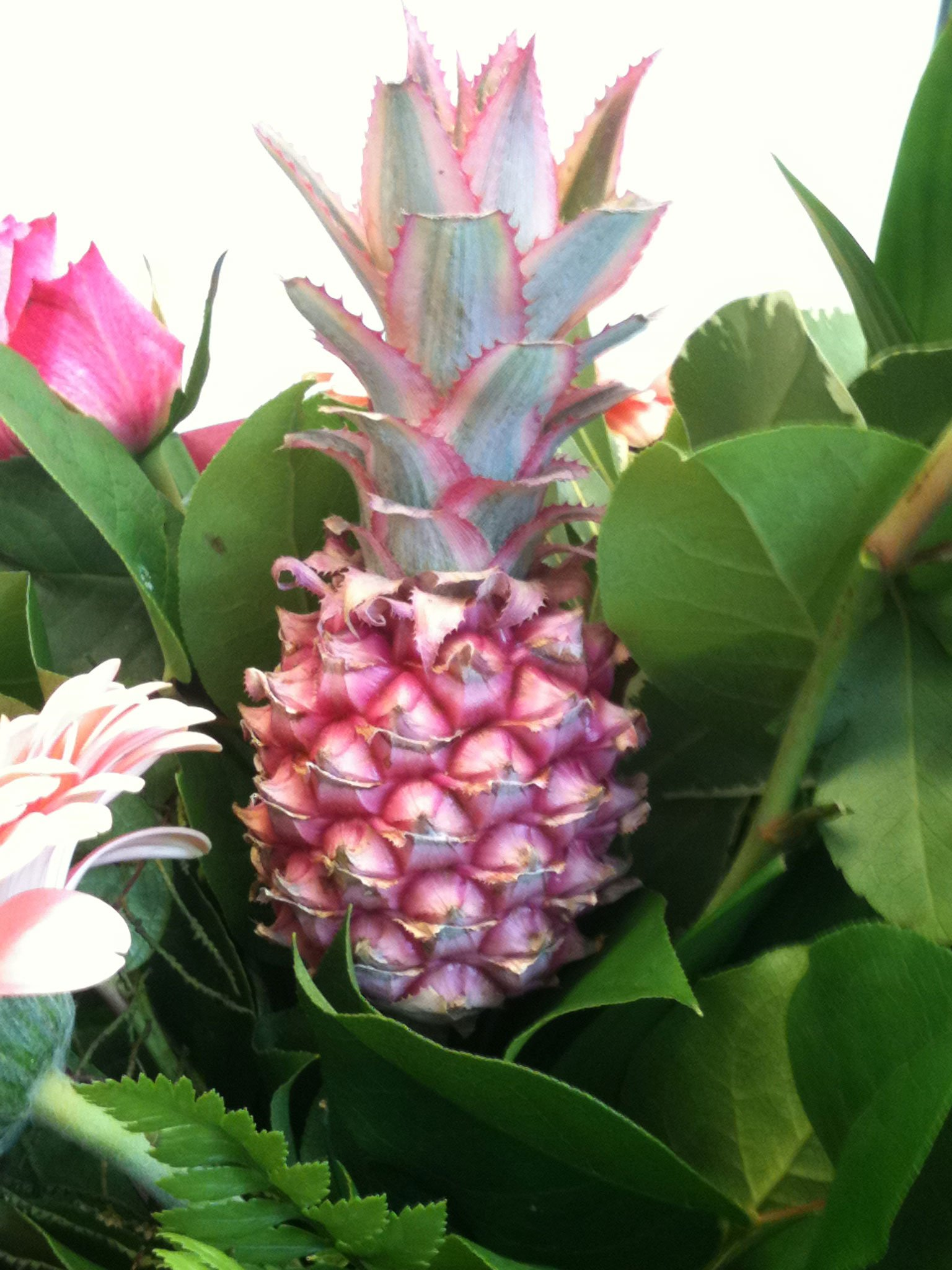 Pflanzen als Dekorationselement