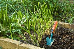 Gemüsegarten: Planung und Anbau