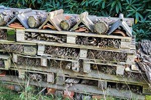 Das Insektenhotel - Aufbau und Einrichtung