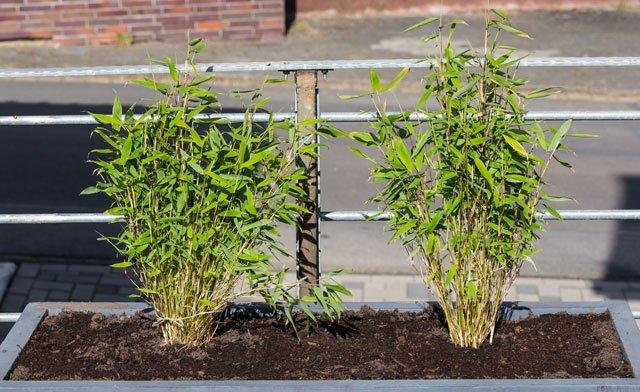 Sichtschutz für Terrassen – 5 stilvolle Möglichkeiten mit ...