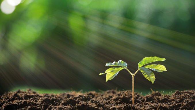 Der Boden als Lebensraum
