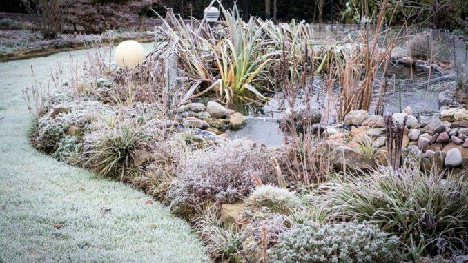 Garten tipps  Die besten Gartentipps im Dezember