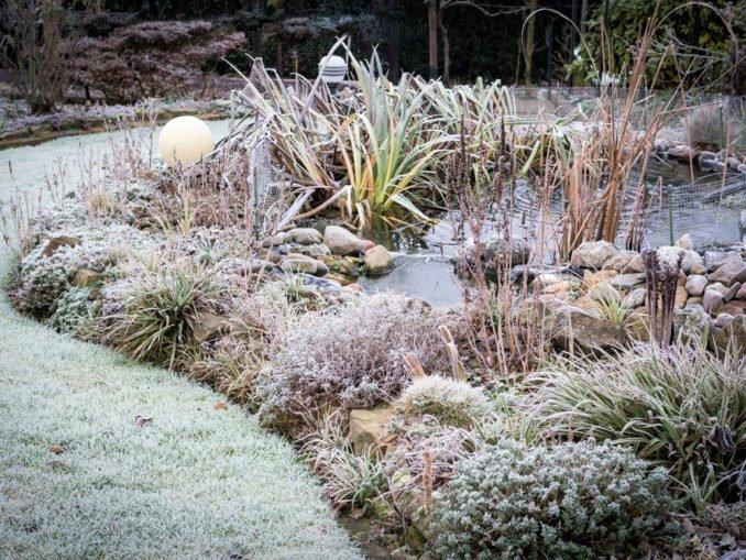 Gartentipps im Dezember