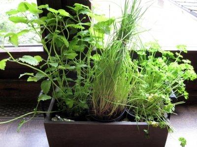 In jedem Küchenfenster lässt sich ein Kräutergarten platzieren