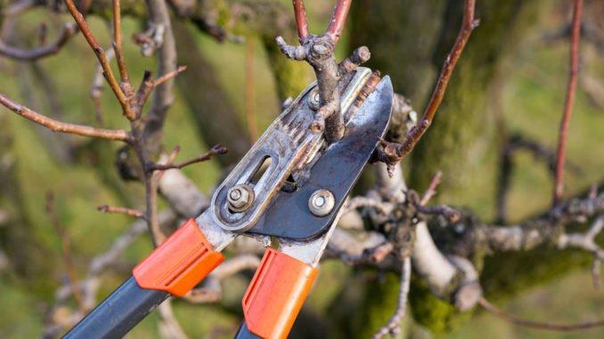 Baumschnitt Was Man Beachten Sollte