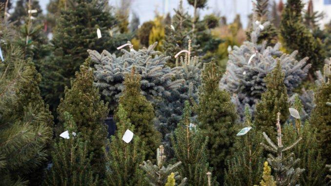 Tannenbaum kaufen