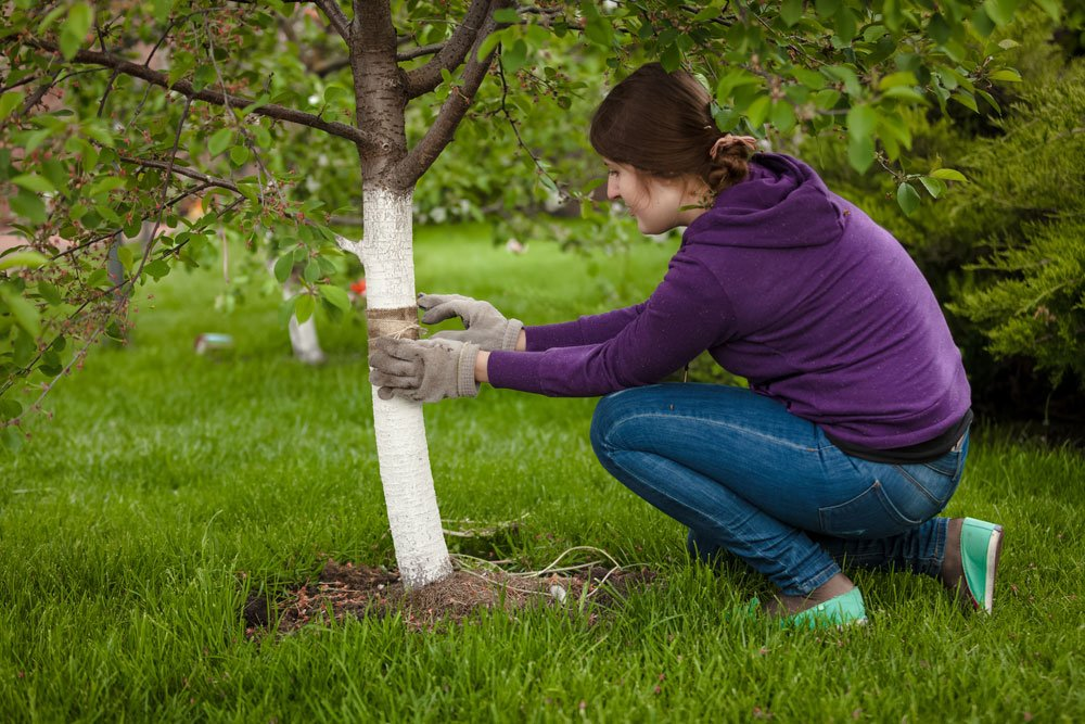 Gartentipps - Kleine Tipps Für Deinen Garten Gartentipps Winter Beachten