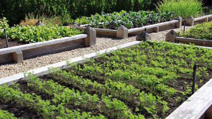 Gemüsegarten Planung