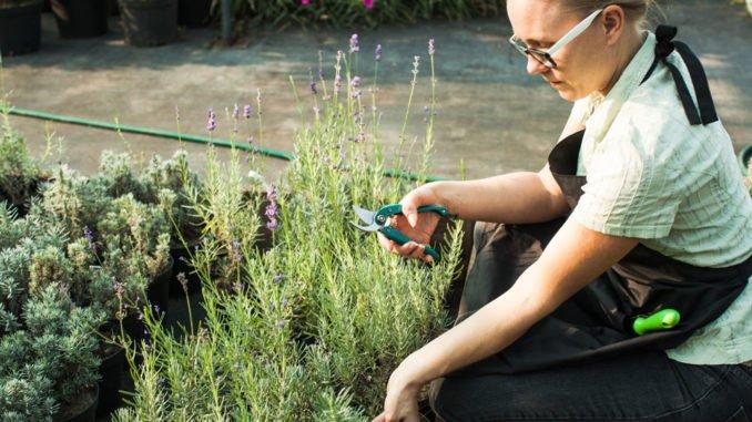 Gartenarbeit August
