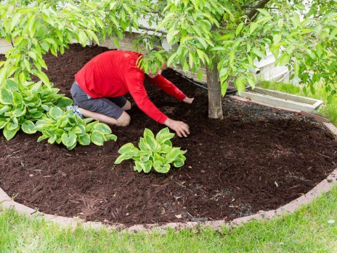 Garten Frühling Mulch
