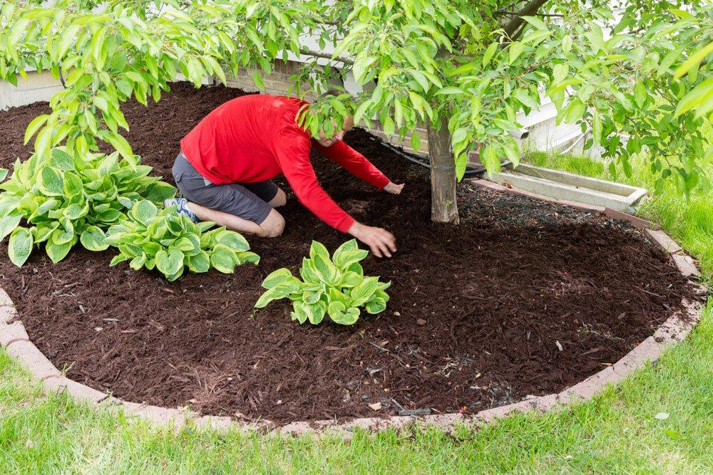 Gartenpflege Archive - Gartentipps Garten Anleitung Gartenpflege