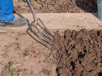 Verdichteter Boden: Grabegabel hilft