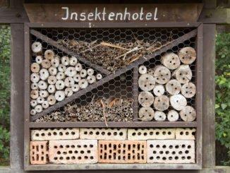 Insektenhotel bauen Anleitung