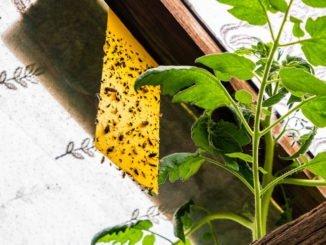 Schädliche Insekten Garten
