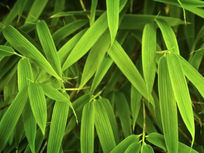 Bambus Rhizompserre Wurzelsperre