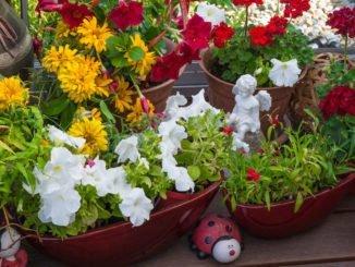 Blumenzwiebeln Balkon Terrasse