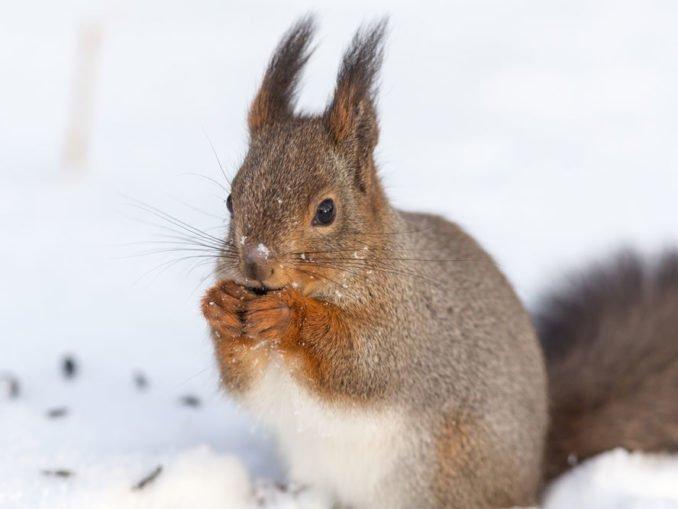 Eichhörnchen Garten Winter füttern