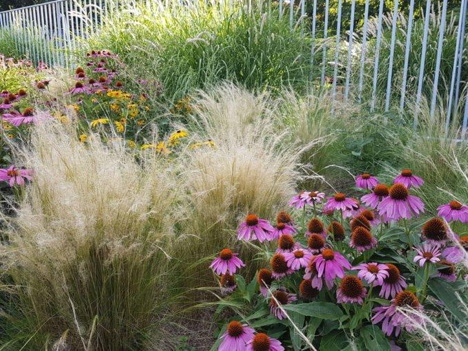 Gartengestaltung mit Gräsern