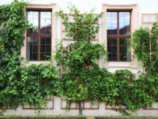 kleiner Garten Kletterpflanzen
