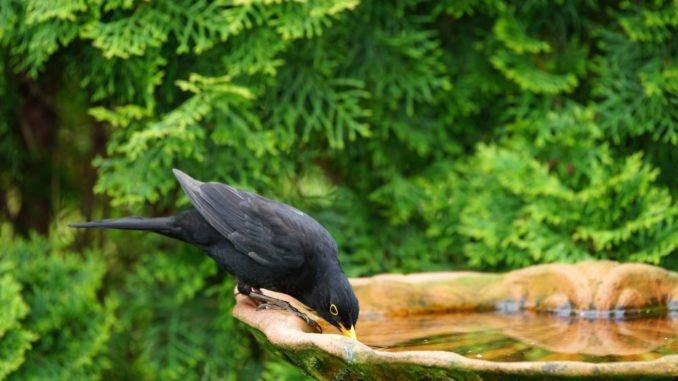 Vögel im Garten mit Wasser versorgen