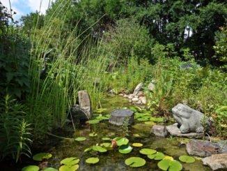 Algen Gartenteich