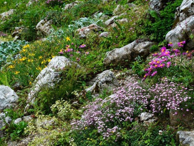 Alpiner Steingarten Alpengarten