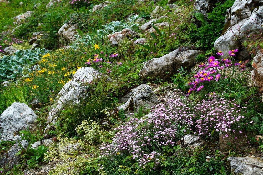 Alpiner steingarten wie ein alpengarten zu hause urlaubsflair schafft - Alpen dekoration ...