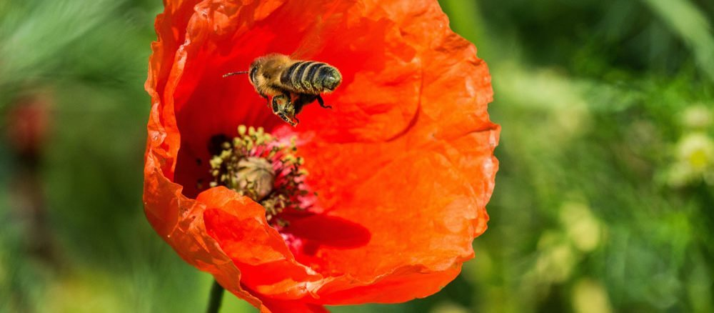 Steingarten anlegen und gestalten for Bienenfreundlicher garten