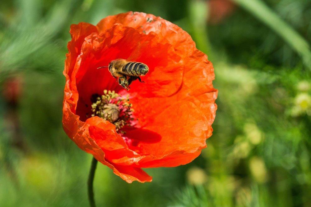 Bienenfreundlicher Garten Mit Allium Krokus Und Co Leicht Umsetzbar