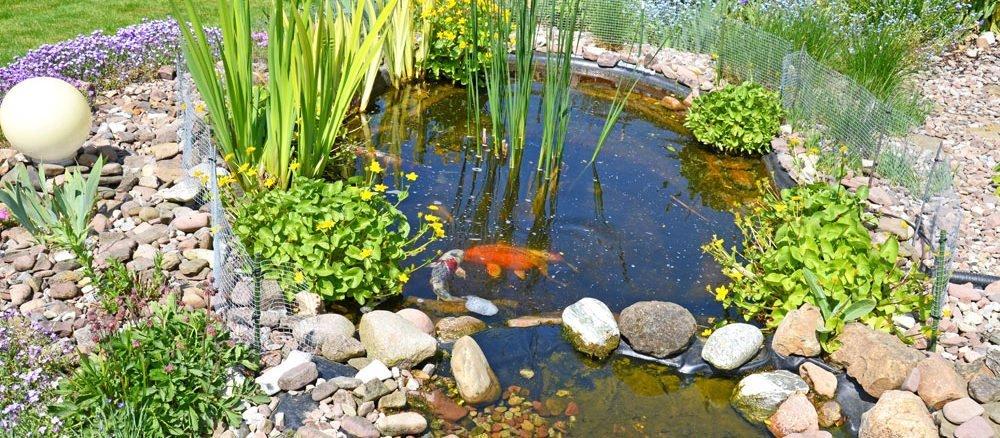 Steingarten anlegen und gestalten for Fische gartenteich