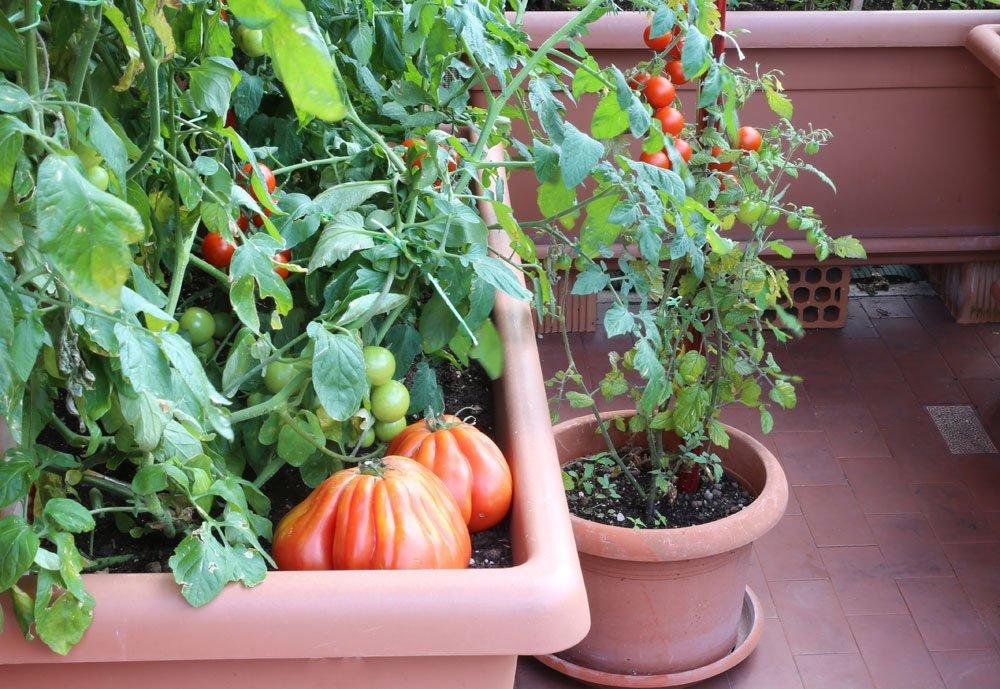 gesundes bio obst und gem se direkt aus dem eigenen garten oder vom balkon. Black Bedroom Furniture Sets. Home Design Ideas