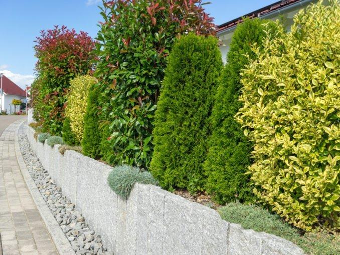 Grenze Hecke Zaun Mauer