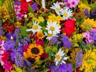 Blumenstrauß Blumenbeet