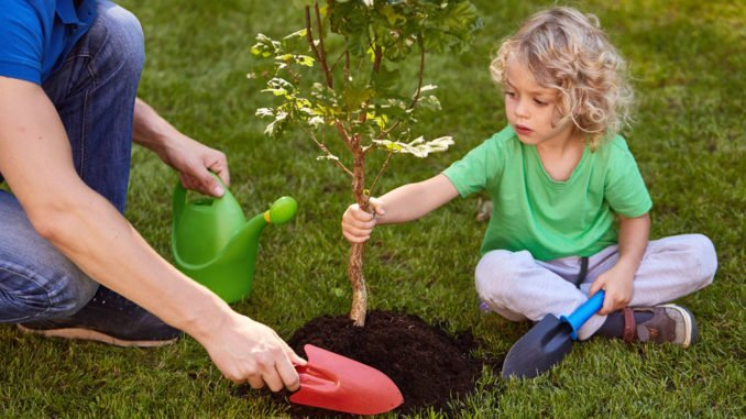 Baum Nach Dem Pflanzen Richtig Verankern