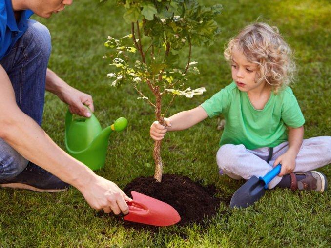 Baum pflanzen verankern