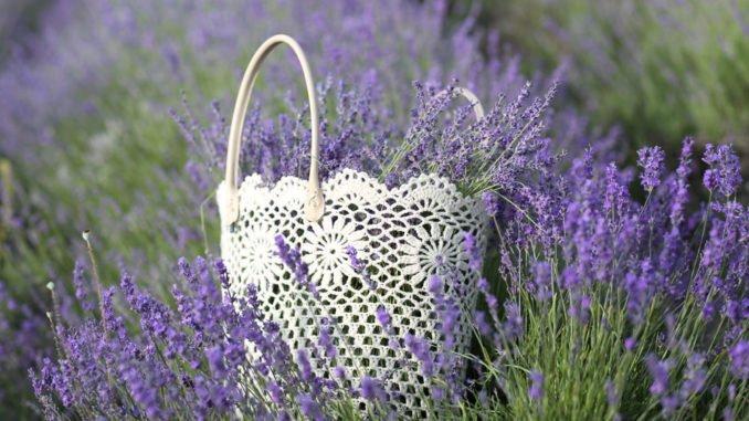 Lavendel Im Garten: Kennen Sie Diese 3 Beliebten Sorten?
