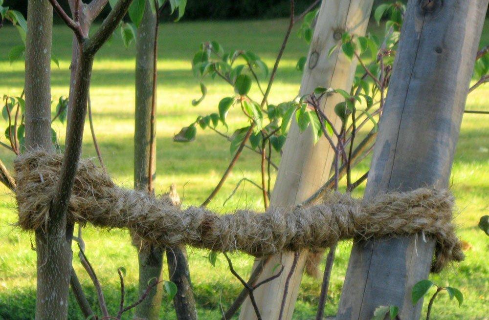 Obstbaum verankern