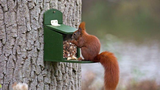 Eichhörnchen Winter füttern