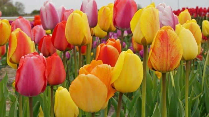 Farbenlehre Garten