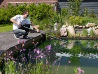 Teichpflege nach dem Winter