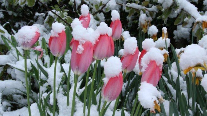 Eisheilge Garten Mai