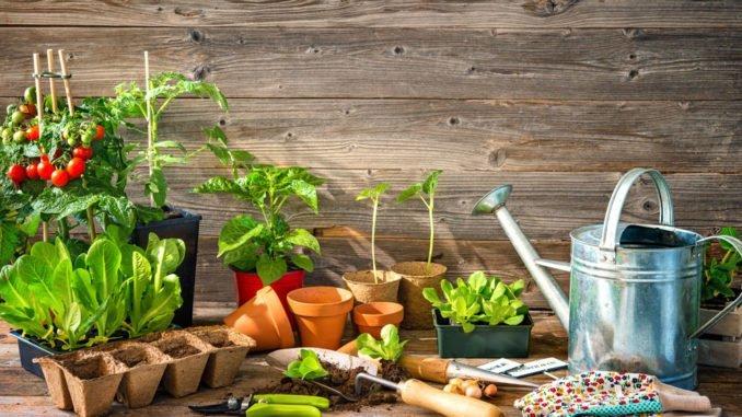 Gemüse Aussaat
