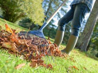 Rasenpflege Frühjahr