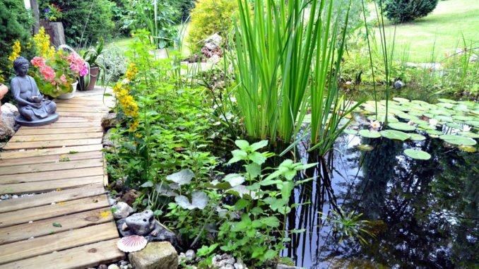 gartenteich bepflanzen vor berlegungen tipps f r ein optimales ergebnis. Black Bedroom Furniture Sets. Home Design Ideas