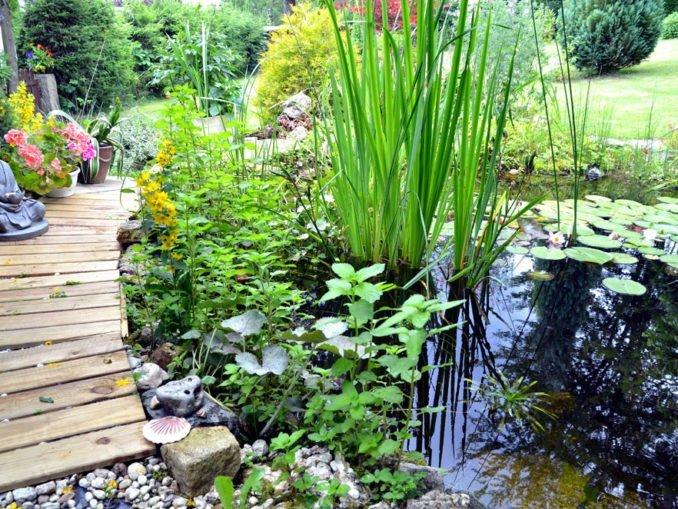 Gartenteich bepflanzen - Tipps für ein optimales Ergebnis