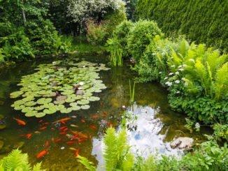 Der Richtige Standort für den Gartenteich