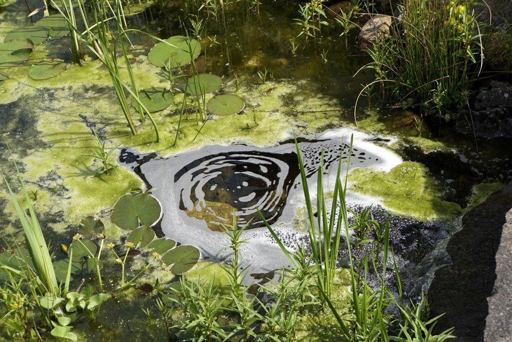 Fadenalgen Im Teich